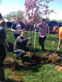 Tree Planting 4'17 (2)